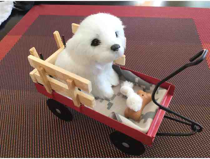 Bichon in a little red wagon with treats