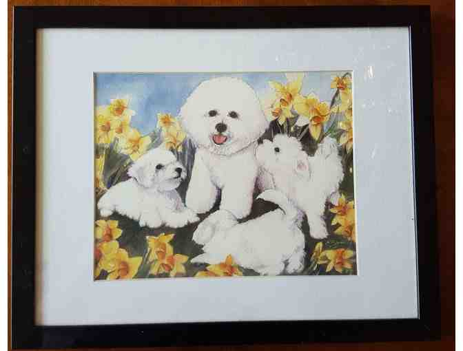 Bichon and Pups Picture