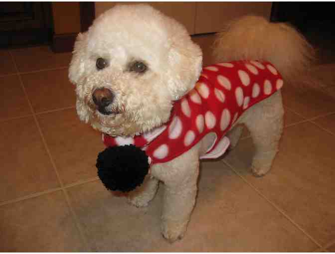 Dog Coat and Scarf - Red/White