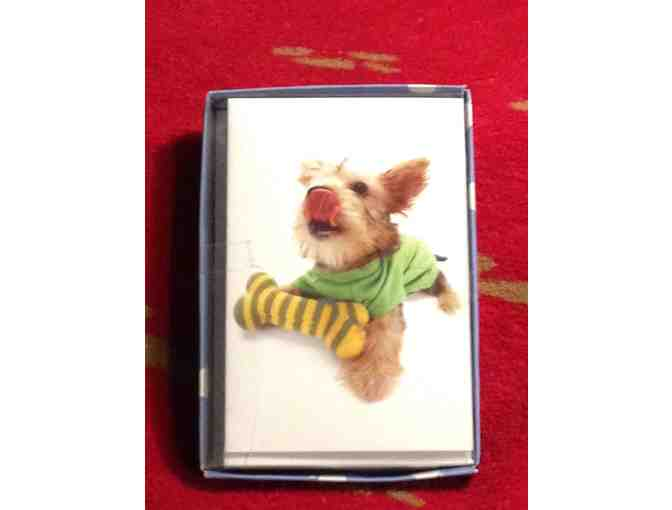 Playful Doggie Notecards