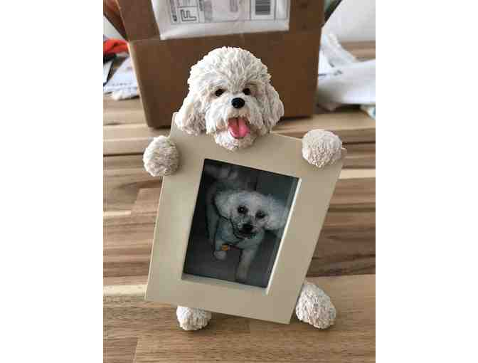 Bichon holding picture frame