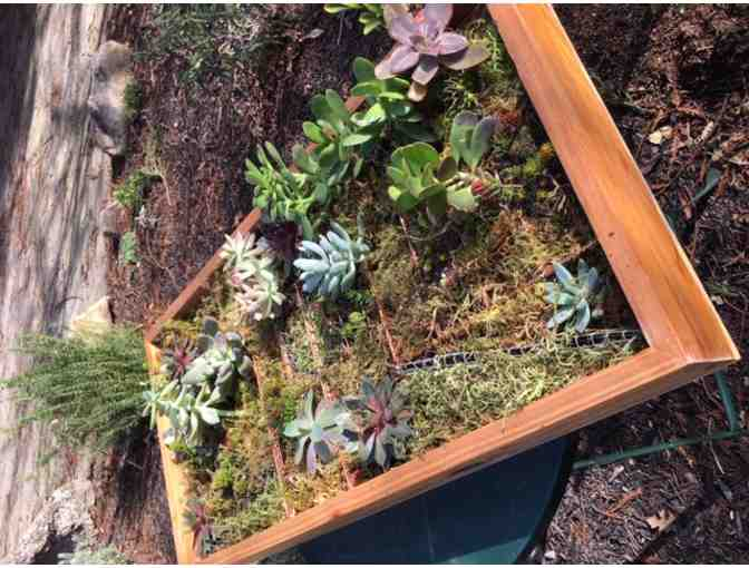 III - Succulent Planter IV - Class Project - TK and 1st