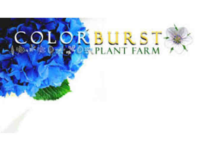 Colorburst Plant Farm $50 worth of plant material