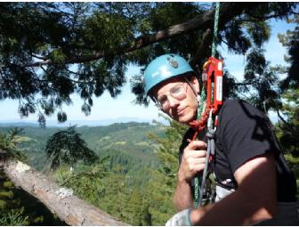 Guided Tree Climb -  Redwood or Douglas-fir! - Photo 2
