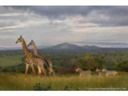 PHOTO Safari for two (KWAZULU - NATAL, SOUTH AFRICA)