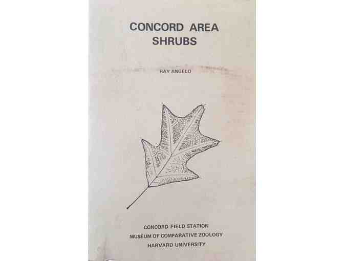 Concord Area Shrubs By Ray Angelo