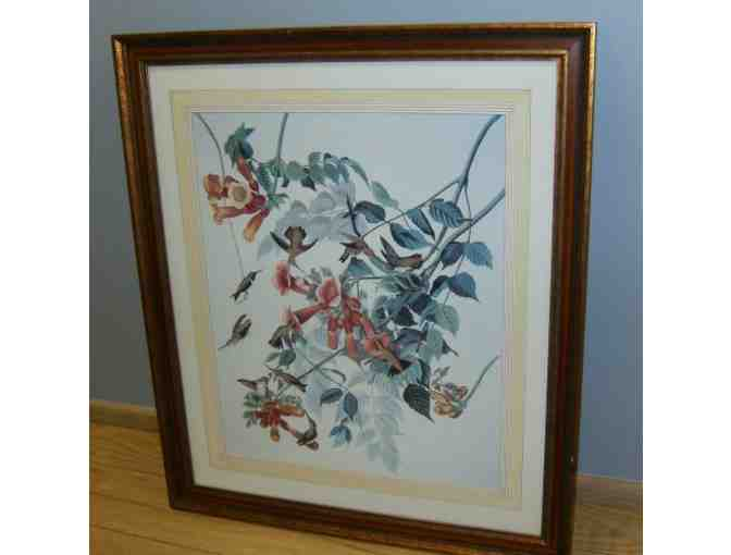 'Ruby-Throated Humming Bird' print by John James Audubon, framed