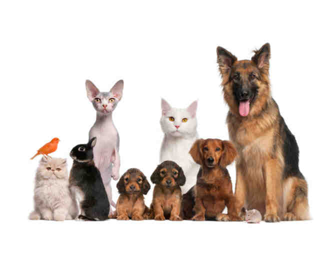 All Creatures Animal Hospital - $50 Certificate