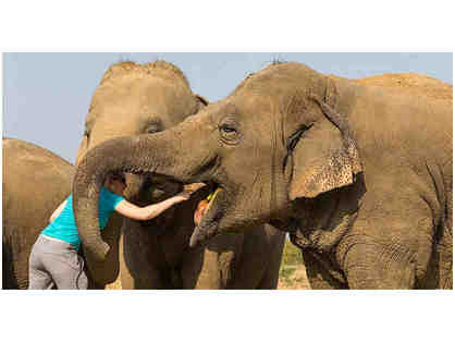 VIP Tour of the Elephant Sanctuary in Agra, India PLUS Dinner for 2 with Cofounders in LA!