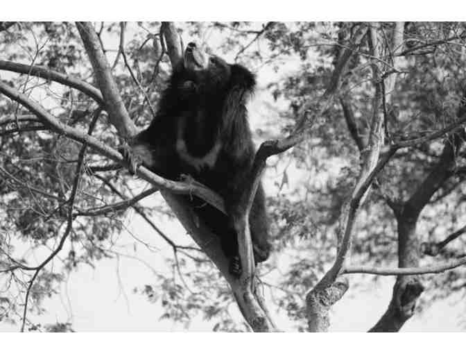 """Adventurous Rose Bear"" Canvas Print - Photo 1"