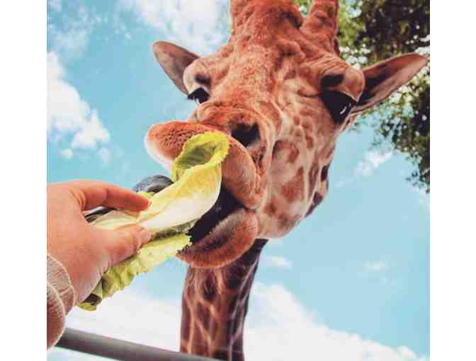 Malibu Wine Safaris - Giraffe Safari for Two ($190 Value)