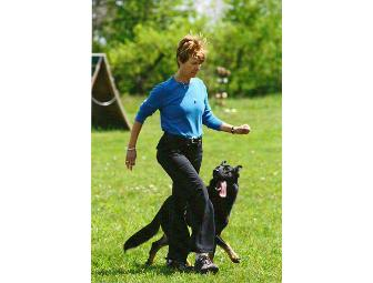Pet Dog Training by Pat Offers a Certificate for a 7-Week Training Class for Puppy 9 weeks-6 Months
