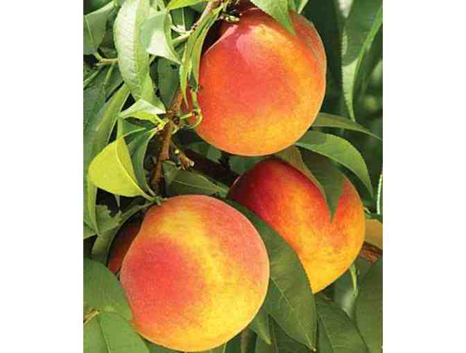 $12 Gift Certificate for Early Morning Orchard - Photo 2