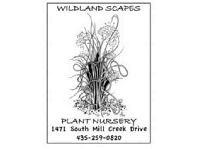 Wildland Scapes Nursery-$25.00 Gift Certificate