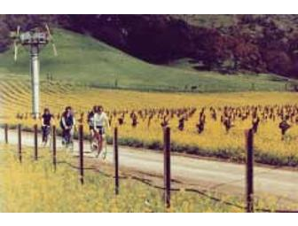 Sonoma Valley Bike Tours (Sonoma, CA): A Classic Wine Country Bike Tour