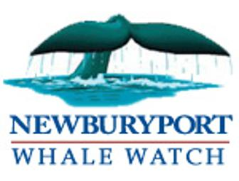 Whale watch from Newburyport Harbor